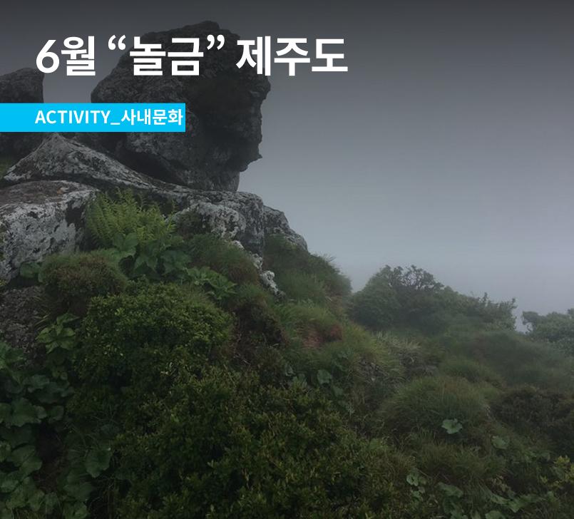 Jeju_gabia